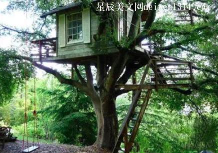 房子里的一棵树