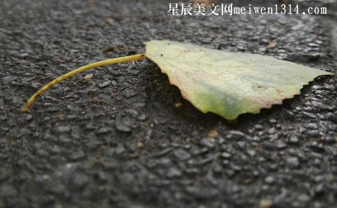 雨后的故事