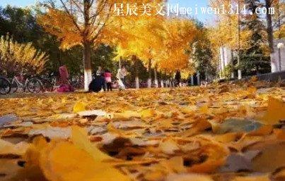 我想赖在燕园,我想赖在燕园的秋日