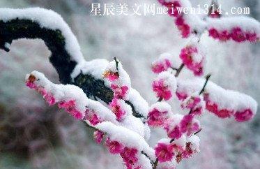 一场雪花飘 一季梅花香