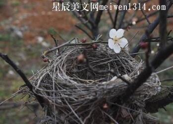 鸟巢里的春天