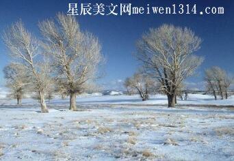 冬天里的树