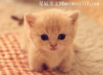 可爱的小猫450字作文