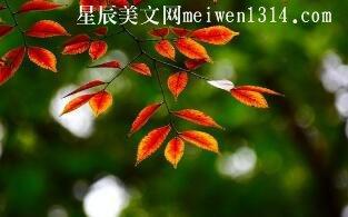 时间打落秋叶