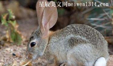一只懒兔子