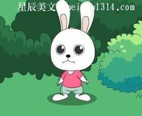 聪慧的小白兔