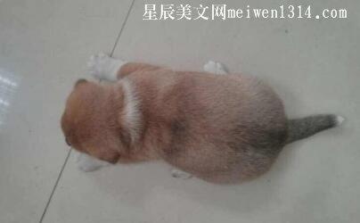 胖嘟嘟的小狗