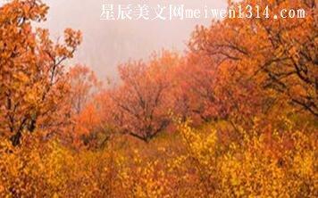 奇丽的秋景
