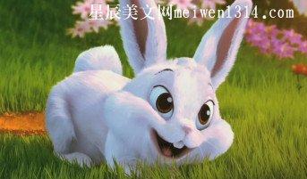 爱玩游戏的小兔子