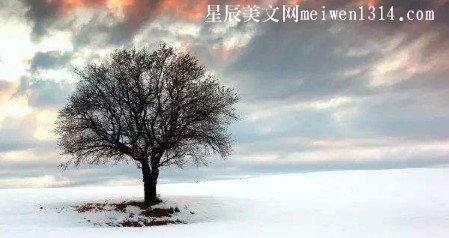 冬至600字作文