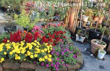 小花圃真美