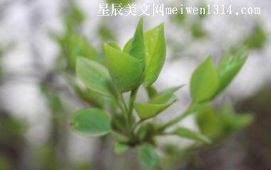 绿色的芳华