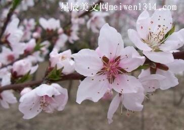 春暖花开,不再相见