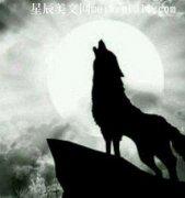 狼王的心愿