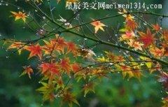 秋雨-关于秋雨的随笔