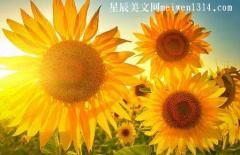句句精辟的正能量句子精选【100句】