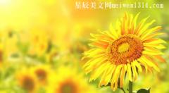 积极向上正能量的句子精选【100句】