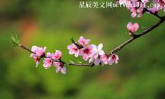 我的植物朋友作文三年级300字桃花【5篇】