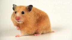 女人梦见老鼠什么征兆?是吉还是凶?