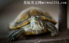 小乌龟作文400字